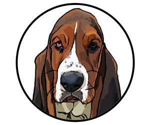 Crate training an adult basset hound