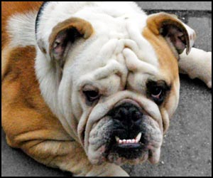 how to stop an english bulldog from biting