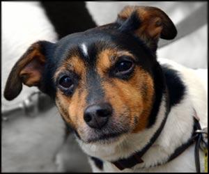 chuck russell terrier
